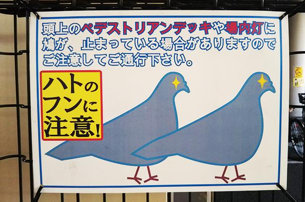 立川駅前の鳩